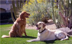 Pet Friendly Gardens at Fairmont Scottsdale Princess, Arizona