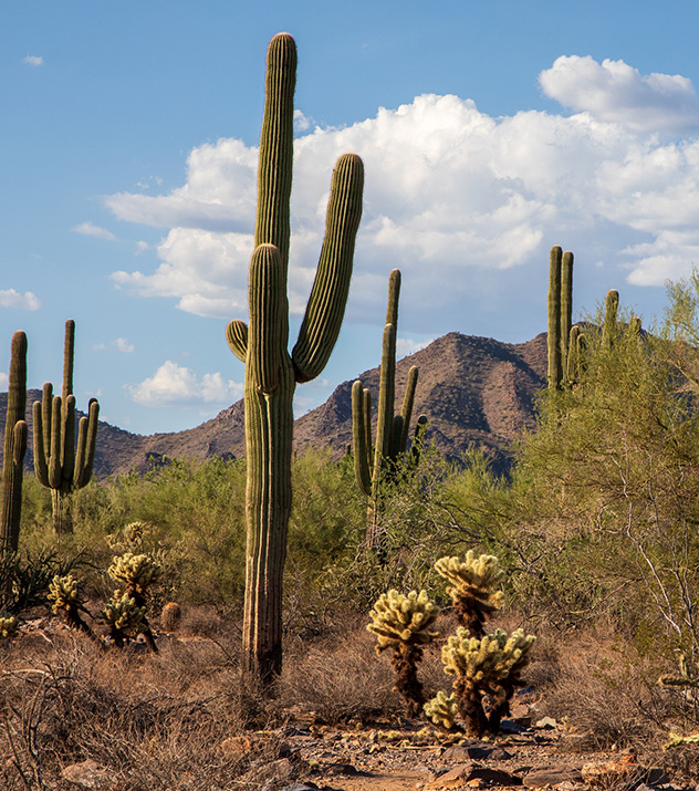 McDowell Sonoran Preserve at Scottsdale ,Arizona
